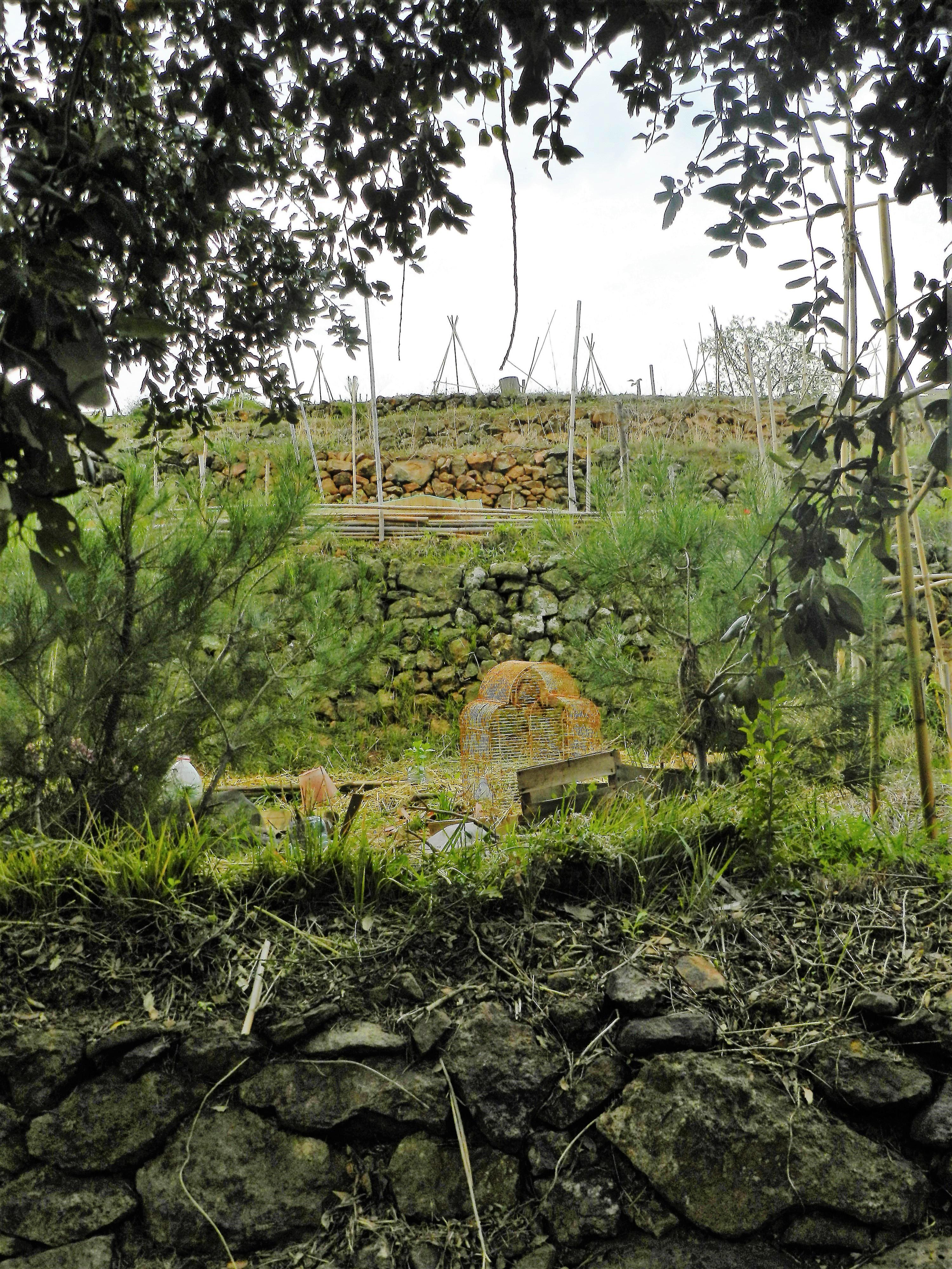 Les restanques de nos jardins partagés au Coupereau, Canebas
