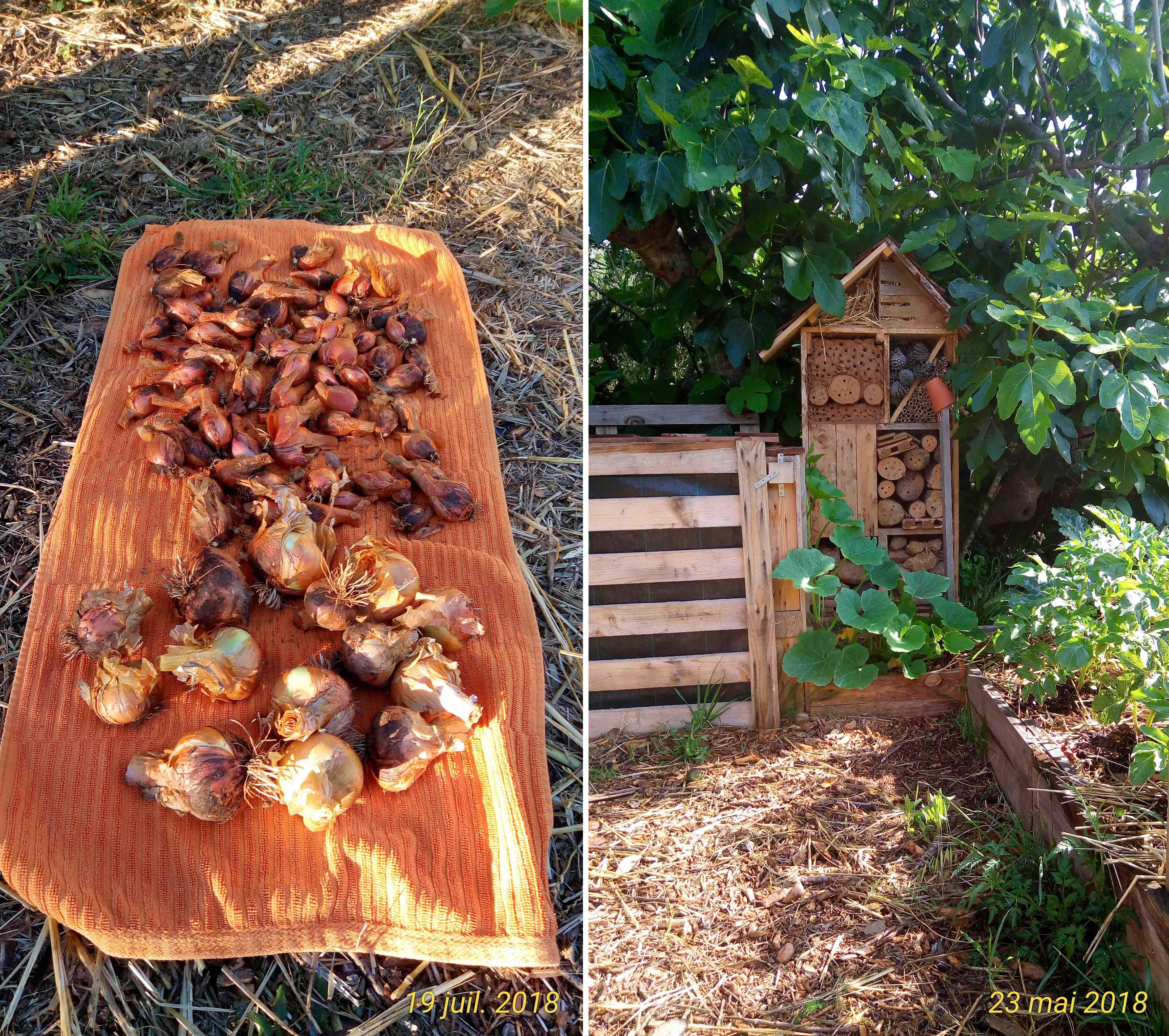 07. récolte oignons & abri insectes