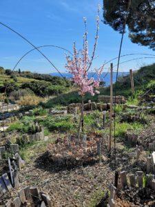 restanques jardins instant partagé carqueiranne